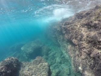 Playa La Caleta - Playa La Caleta - Fondo marino rocoso. Inmersión practicando snorkel o buceo.