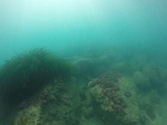 Playa La Caleta - Playa La Caleta - Fondo marino rocoso con posidonia practicando snorkel o buceo
