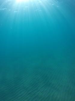 Playa La Caleta - Playa La Caleta - Fondo marino arenoso con destellos de los rayos del sol atravesando el agua. Practicando snorkel o buceo