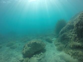 Playa La Caleta - Playa La Caleta - Fondo marino rocoso, inmersión practicando snorkel o buceo.