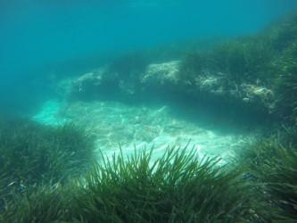 Snorkel en Playa del Torres Zona Norte