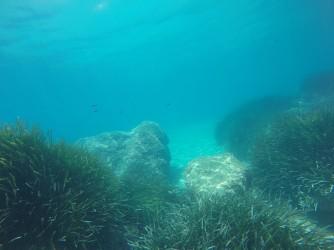 Snorkel Playa del Torres - Snorkel Playa del Torres - Pradera de posidonia y fondo marino arenoso con formaciones rocosas.