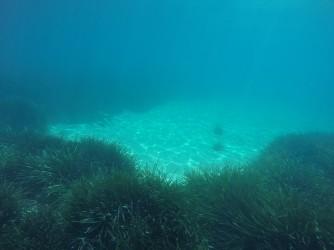 Snorkel Playa del Torres - Snorkel Playa del Torres - Fondo marino arenoso con zonas de posidonia oceánica.