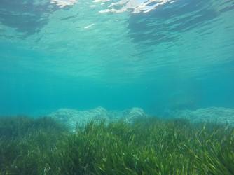Snorkel Playa del Torres - Snorkel Playa del Torres - Pradera de posidonia y al fondo formaciones rocosas.