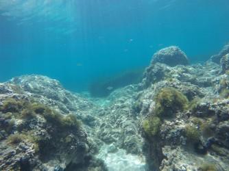 Snorkel Playa del Torres - Snorkel Playa del Torres - Fondo marino rocoso, se observa un pez tordo al fondo.
