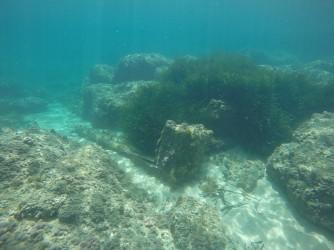 Snorkel Playa del Torres - Snorkel Playa del Torres - Fondo marino rocoso con zona con posidonia.
