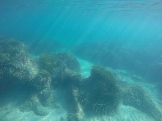 Snorkel playa del Charco - Snorkel playa del Charco - Bonita fondo con formaciones rocosas, arena y posidonia oceánica.