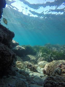 Snorkel playa del Charco - Snorkel playa del Charco - Mojarra en zona rocosa con posidonia y el agua especialmente cristalina.