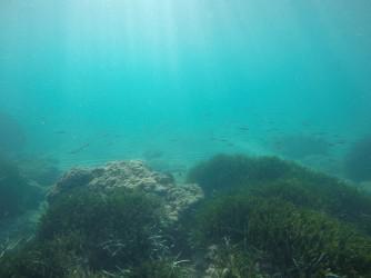 Snorkel playa del Charco - Snorkel playa del Charco - Banco de peces alevines que nos envolvía por todas partes.