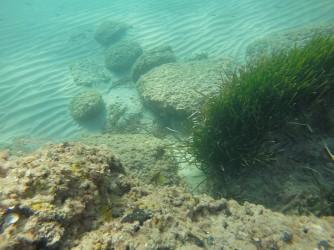 Snorkel playa del Charco - Snorkel playa del Charco - Ejemplar de Mero que no nos quitaba el ojo de encima. Suelen ser muy huidizos y se esconden manteniendonos en su campo de visión.