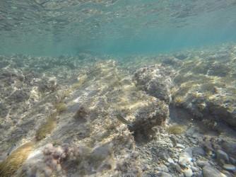 Snorkel playa del Charco - Snorkel playa del Charco - Pez verde o Doncella en zona de placas de roca detrás de la Torre.