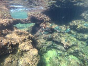 Fondo rocoso Les Arenetes - Fondo rocoso Les Arenetes - Fondo rocoso en Les Arenetes y un banco de obladas