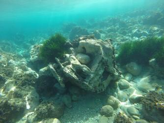 Snorkel en Cala de Dins - Snorkel en Cala de Dins - Formación rocosa bastante peculiar rodeada de fondo con rocas y posidonia.