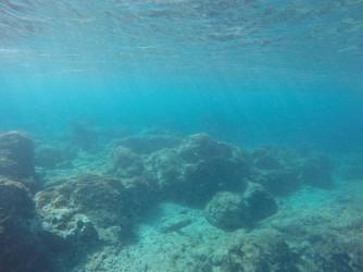 Snorkel en Cala de Dins - Snorkel en Cala de Dins - Fondo marino con formaciones rocosas.