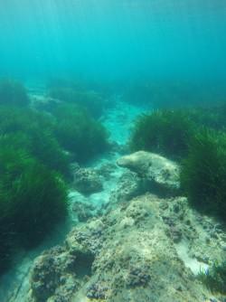 Snorkel en Cala de Dins - Snorkel en Cala de Dins - Fondo marino arenoso y rocoso con posidonia.