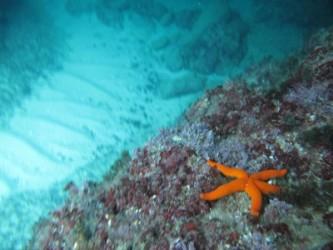 Snorkel en Cala Racó del Corb