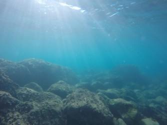 Snorkel platya del Portet - Snorkel platya del Portet - Fondo marino rocoso