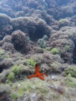 Snorkel platya del Portet - Snorkel platya del Portet - Estrella de mar sobre fondo marino