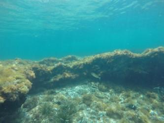 Snorkel en Playa de la Fosa