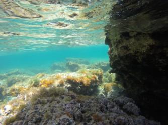Snorkel en Playa de la Fosa - Snorkel en Playa de la Fosa - Fondo rocoso con gran número de plantas marinas.