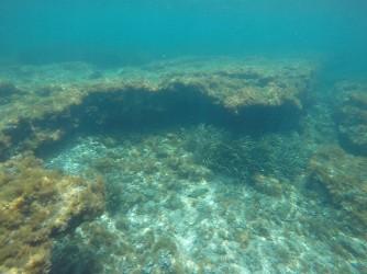 Snorkel en Playa de la Fosa - Snorkel en Playa de la Fosa - Formación rocosa con ejemplar de pez Tordo.