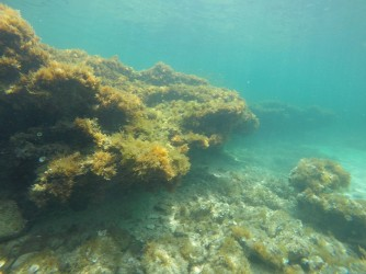 Snorkel en Playa de la Fosa - Snorkel en Playa de la Fosa - Formación rocosa repleta de plantas marinas.