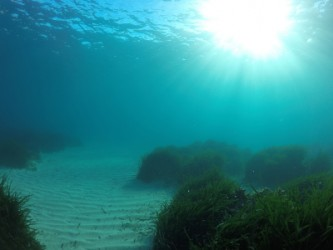 Snorkel en Racó de Conill