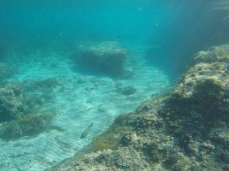 Snorkel en Cala Racó de Conill - Snorkel en Cala Racó de Conill - Fondo arenoso con formaciones rocosas. Pez tordo de llamativos colores.