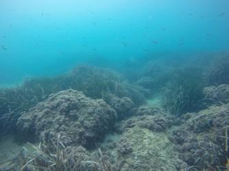 Snorkel en Cala Racó de Conill - Snorkel en Cala Racó de Conill - Fondo marino rocoso con dos mojarras y pequeños bogas.