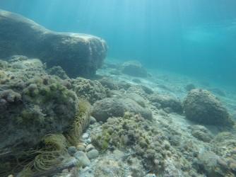 Snorkel en Cala Racó de Conill - Snorkel en Cala Racó de Conill - Anémonas en fondo rocoso.