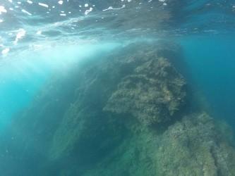 Punta del Mascarat - Punta del Mascarat - Vistas del fondo marino practicando snorkel o buceo.