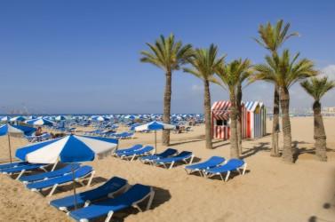Playa de Levante - Playa de Levante - Detalle a pié de playa de las palmeras, sombrillas y hamacas de alquiler.