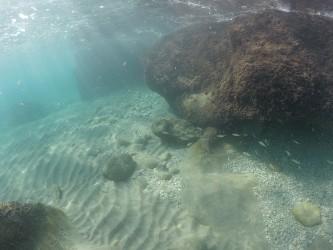 Cala Finestrat - Cala Finestrat - Vista fondo marino rocoso practicando snorkel o buceo en la cala Finestrat - Benidorm - Alicante