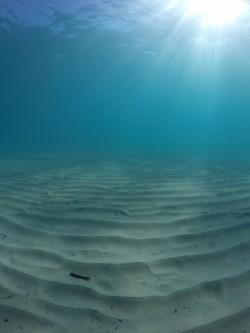 Cala Finestrat - Cala Finestrat - Vista fondo marino de arena practicando snorkel o buceo. Benidorm - Alicante