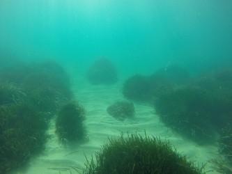 Playa del Torres - Playa del Torres - Fondo marino arenoso con colonias de posidonia