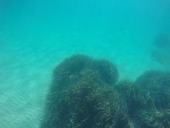 Playa del Torres - Playa del Torres - Fondo marino arenoso con colonia de posidonia