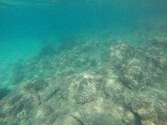 Playa del Torres - Playa del Torres - Fondo marino rocoso con cormorán buceando