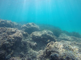 Playa del Torres - Playa del Torres - Fondo marino rocoso y colonia de posidonia