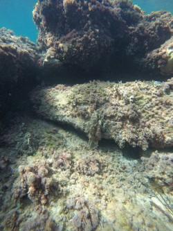Playa del Torres - Playa del Torres - Fondo marino rocoso con algas y esponjas