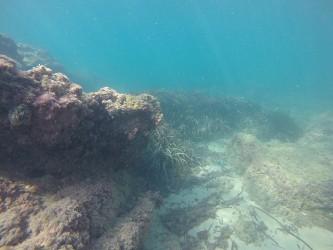 Playa del Torres - Playa del Torres - Fondo marino rocoso con posidonia