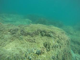 Playa del Torres - Playa del Torres - Fondo marino rocoso con esponja de mar