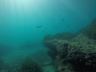Playa del Torres - Playa del Torres - Fondo marino rocoso y arenoso con peces