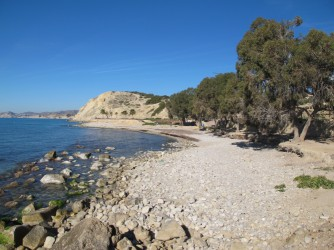 Platja Puntes del Moro - Platja Puntes del Moro - Zona nort de la platja amb eucaliptus. Vistes mirant cap al sud amb penya-segats al fons.