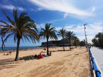 Playa del Postiguet - Playa del Postiguet - Playa con algunas palmeras junto a paseo marítimo y zona de hoteles al fondo.