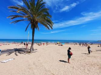 Playa del Postiguet - Playa del Postiguet - Detalle palmera.