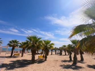 Playa del Cocó - Playa del Cocó - Zona de palmeras.